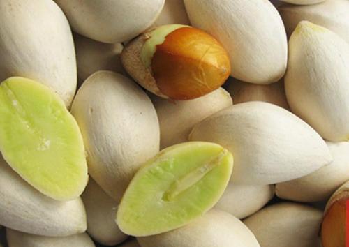 白果的功效与作用及药膳做法
