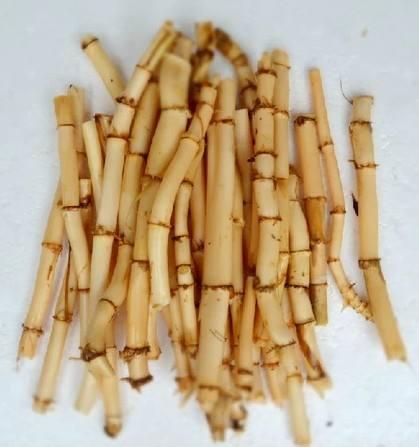 芦根的功效与作用及药膳做法