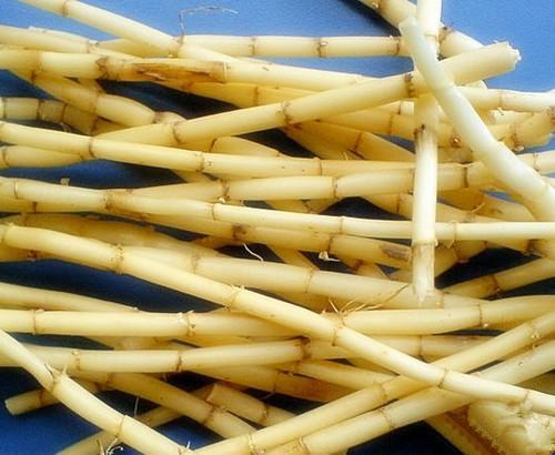 白茅根的功效与作用及药膳做法