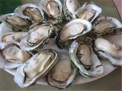 牡蛎的功效与作用及药膳做法