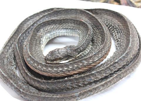 乌梢蛇的功效与作用及药膳做法