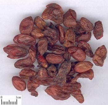 山茱萸的功效与作用及药膳做法
