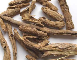 地骨皮的功效与作用及药膳做法