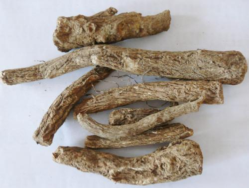 木香的功效与作用及药膳做法