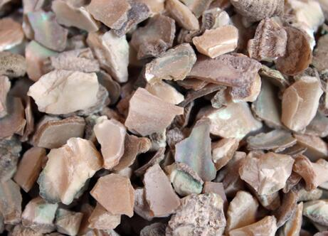 石决明的功效与作用及药膳做法