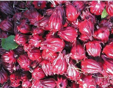 玫瑰茄的功效与作用及药膳做法