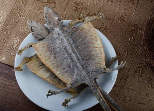 蛤蚧的功效与作用及药膳做法